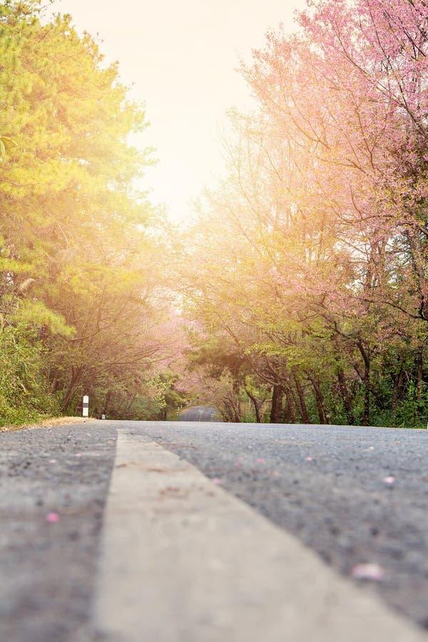桃红色樱花树隧道 库存图片
