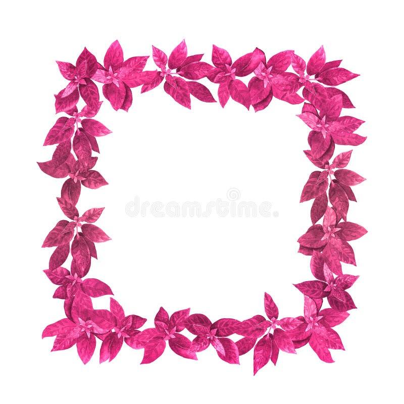 桃红色水彩正方形草本框架 库存照片