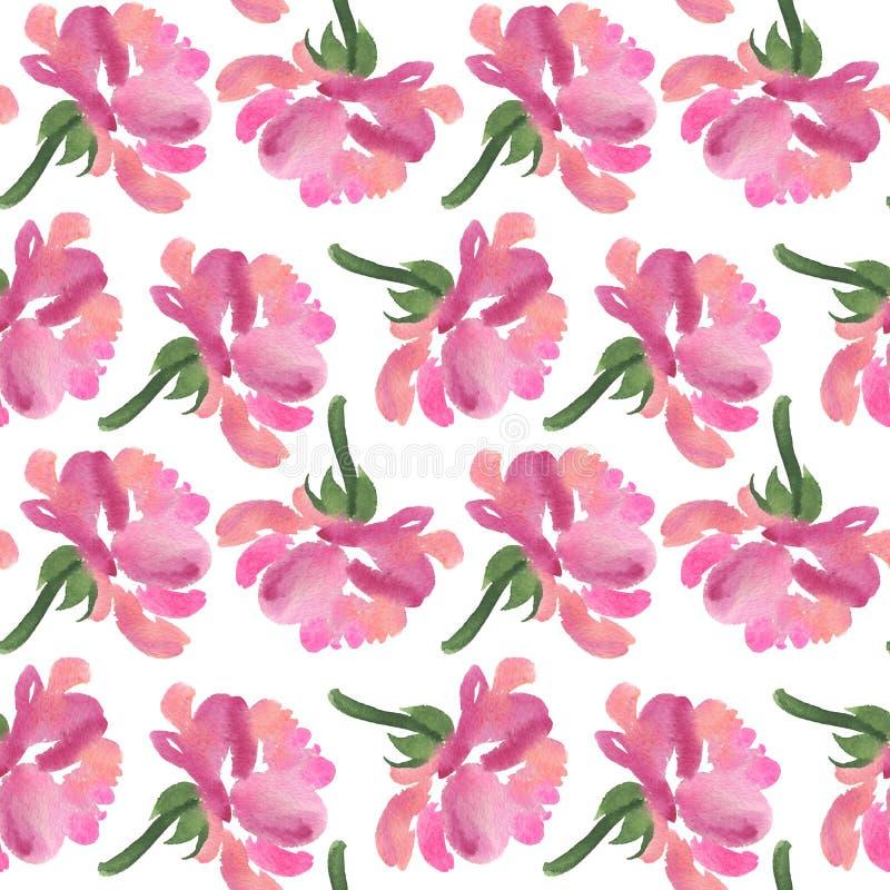 桃红色水彩玫瑰色花的无缝的样式 向量例证