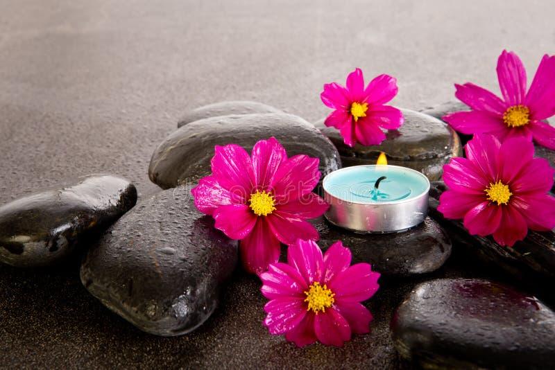 桃红色波斯菊开花与黑按摩岩石,蓝色tealight cand 库存图片