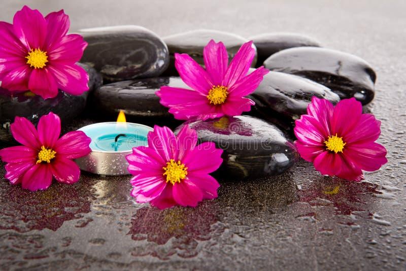 桃红色波斯菊开花与黑按摩岩石,蓝色tealight cand 免版税库存图片