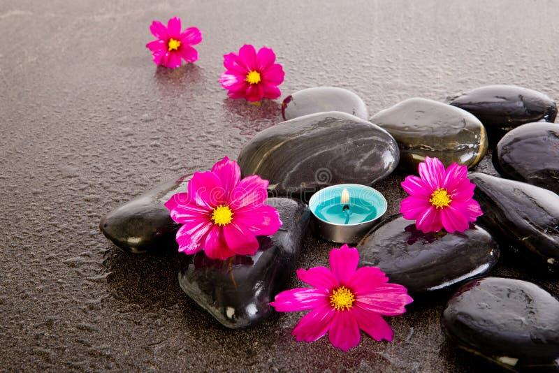 桃红色波斯菊开花与黑按摩岩石,蓝色tealight cand 库存照片