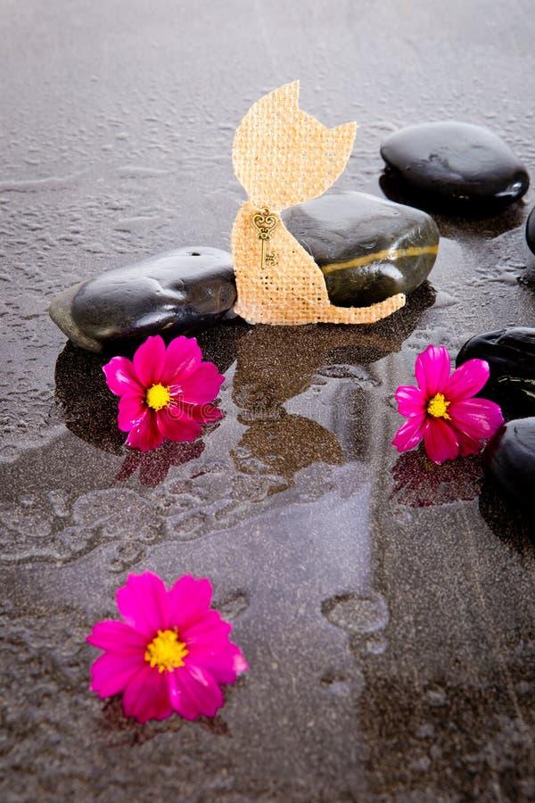 桃红色波斯菊花和粗麻布猫在黑按摩岩石塑造 免版税库存图片