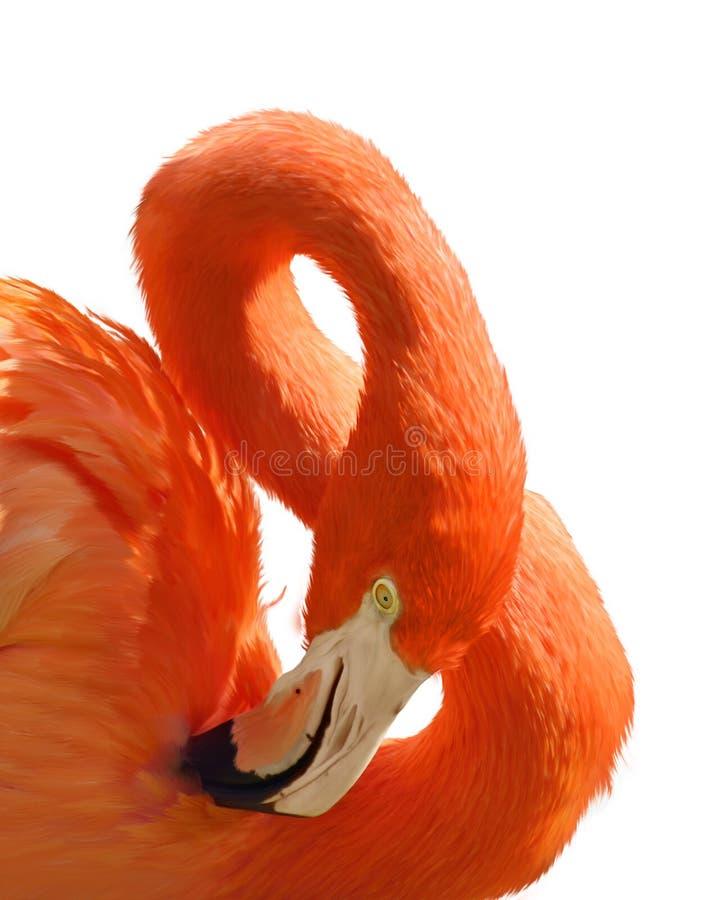 桃红色火鸟纵向 库存例证