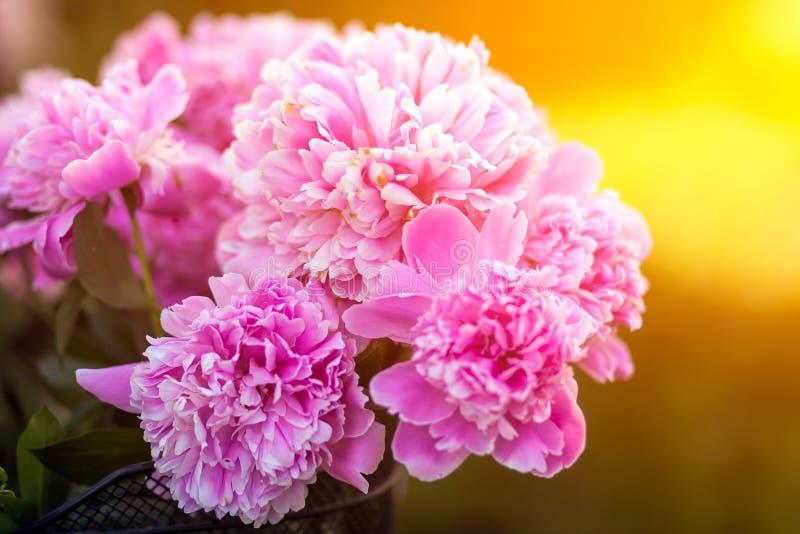 桃红色牡丹美丽的新鲜的花束的特写镜头  库存图片