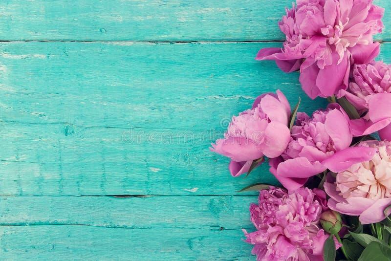 桃红色牡丹花束在绿松石土气木backgro开花 库存图片