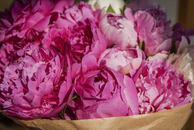 桃红色牡丹花束  库存图片