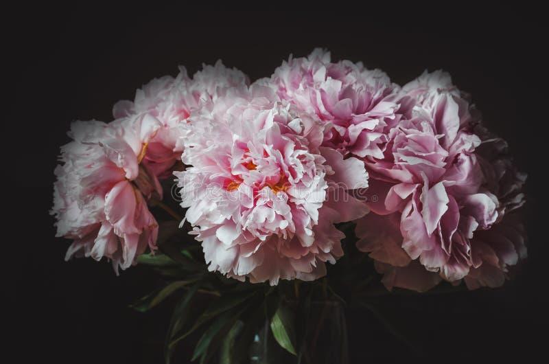 桃红色牡丹花美丽的花束在黑背景的 牡丹夏天 花卉爱 新的发行被重新设计的美元钞票 卡片,文本,拷贝 免版税库存照片