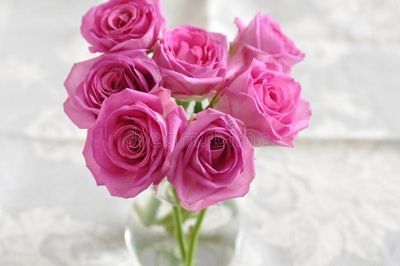 桃红色玫瑰。 免版税图库摄影
