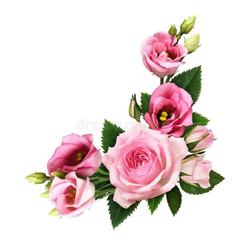 桃红色玫瑰和南北美洲香草花和芽在一个花卉壁角安排 免版税库存照片