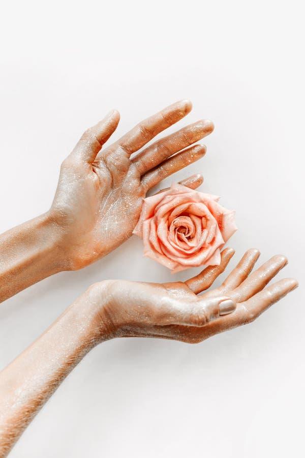 桃红色玫瑰在妇女有金子的` s手上在瓣关闭  库存图片