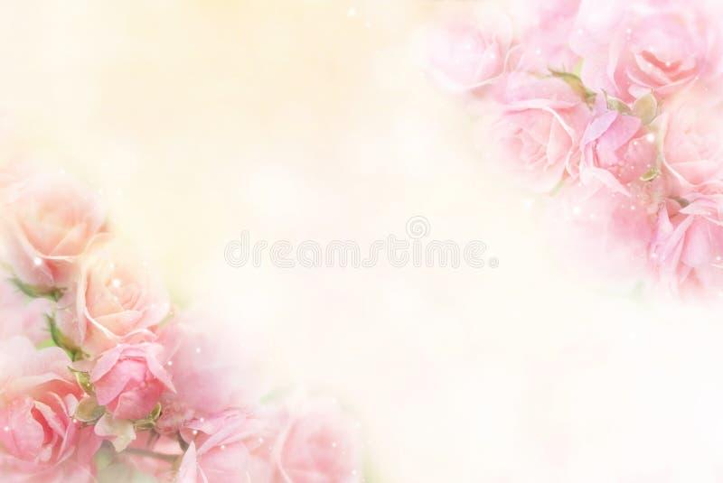桃红色玫瑰开花华伦泰的边界软的背景 库存照片