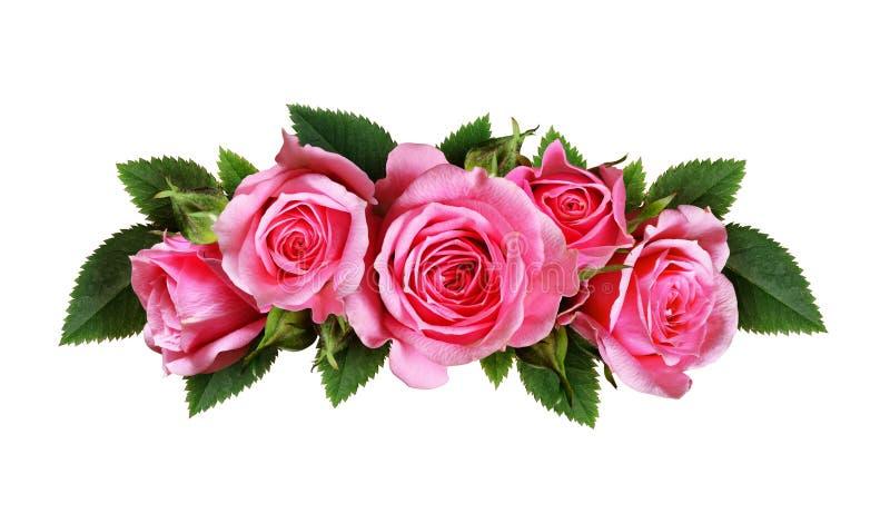 桃红色玫瑰开花弧安排 库存照片