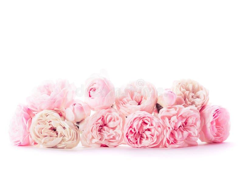 桃红色玫瑰束 库存照片
