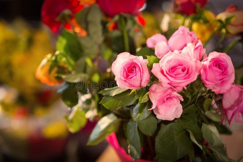 桃红色玫瑰特写镜头  免版税库存图片