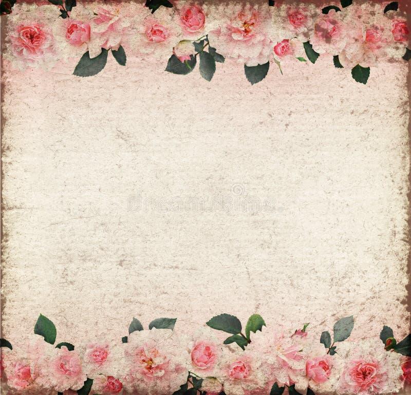 桃红色玫瑰花和叶子在老纸 向量例证