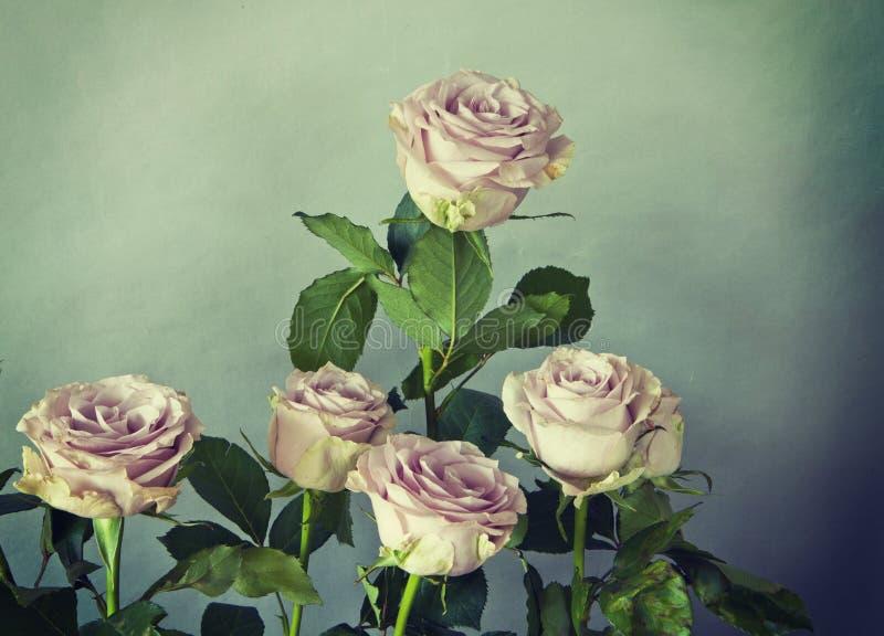 桃红色玫瑰花束与减速火箭的作用的 库存图片