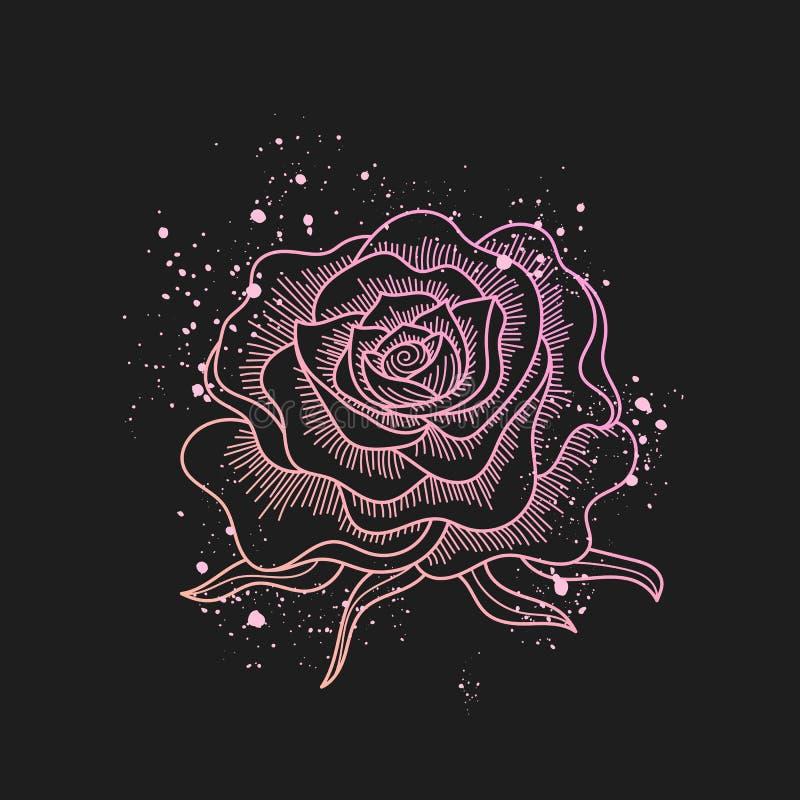 桃红色玫瑰在黑背景和油漆的花线艺术飞溅,纹身花刺样式 能为邀请使用图片