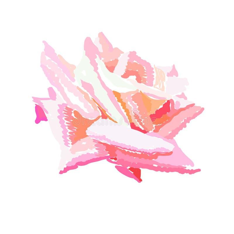 桃红色玫瑰花蕾水彩设计元素 手拉的盛放的花 背景粉红色玫瑰白色 向量例证