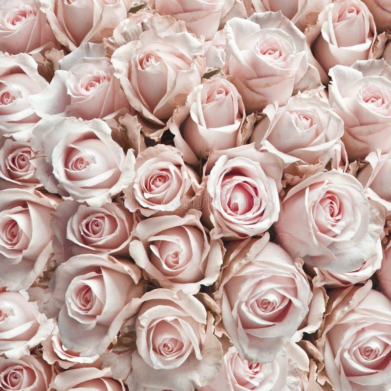 桃红色玫瑰葡萄酒 免版税库存照片