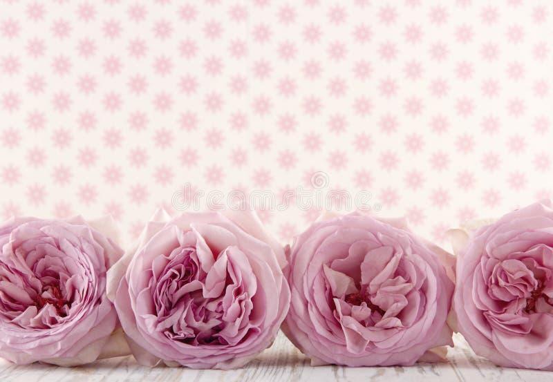 桃红色玫瑰行  免版税库存照片