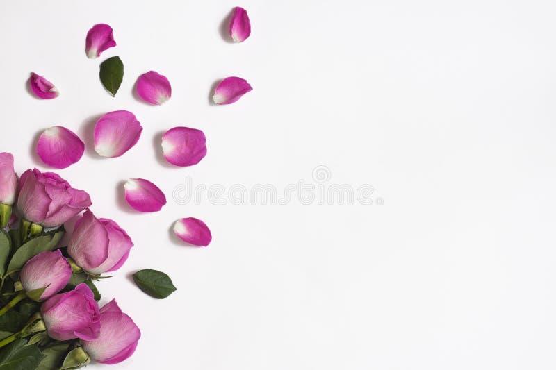 桃红色玫瑰,玫瑰花瓣和绿色叶子在白色背景 免版税库存照片