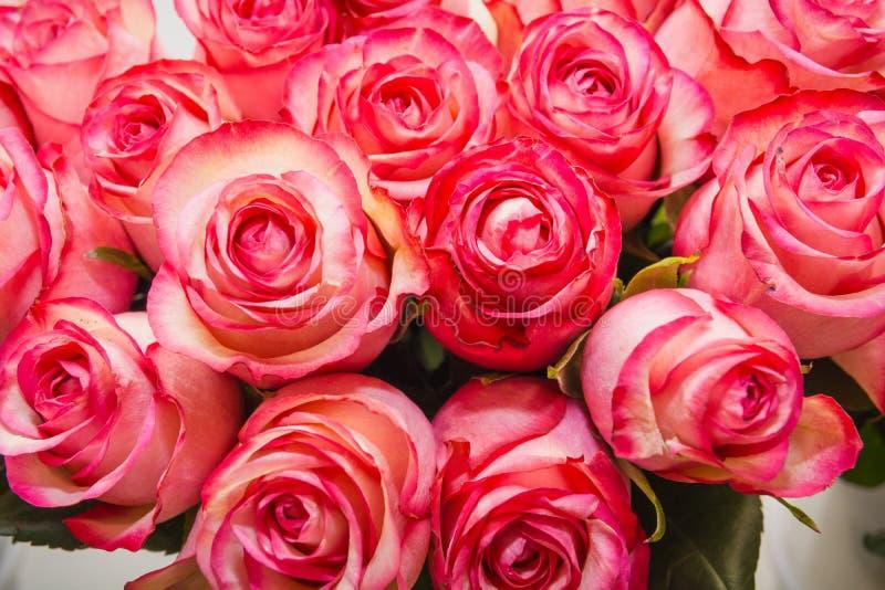 桃红色玫瑰 它是很多桃红色玫瑰 库存图片