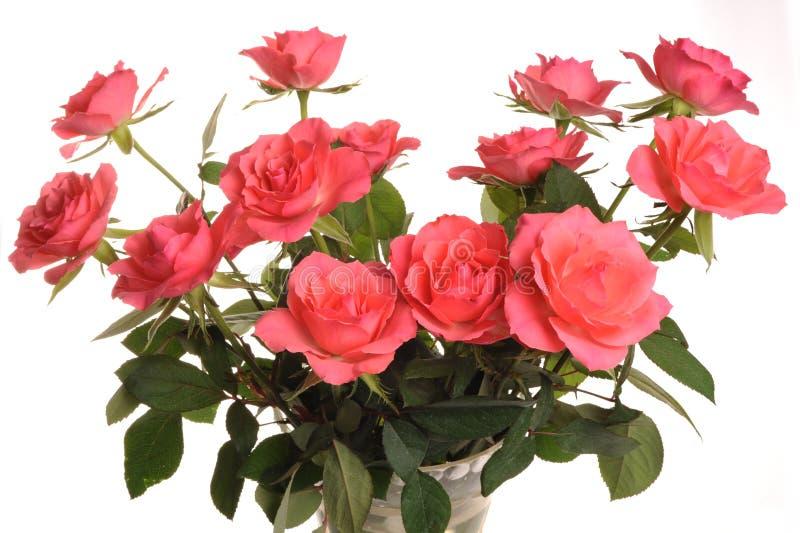桃红色玫瑰 免版税库存图片
