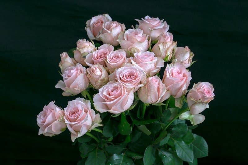 桃红色玫瑰Handbouquet有黑背景和露水细节在玫瑰做玫瑰看很美丽和魅力 库存照片