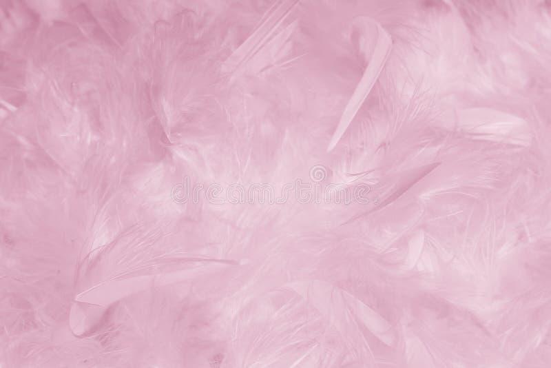 桃红色用羽毛装饰背景-储蓄照片 免版税图库摄影
