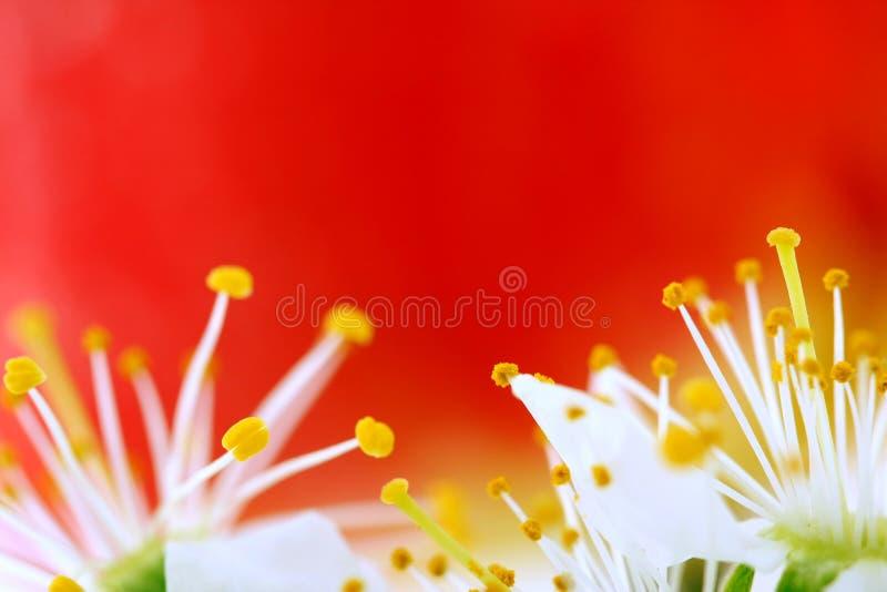 桃红色的开花 图库摄影