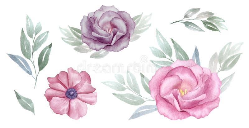 桃红色的葡萄酒和紫色花水彩集合 罗斯和银莲花属开花 问候,邀请,婚礼,生日贺卡 库存例证