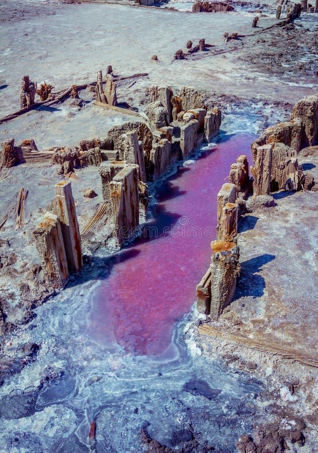 桃红色盐湖盐水水坑与外壳的表面上 免版税库存图片