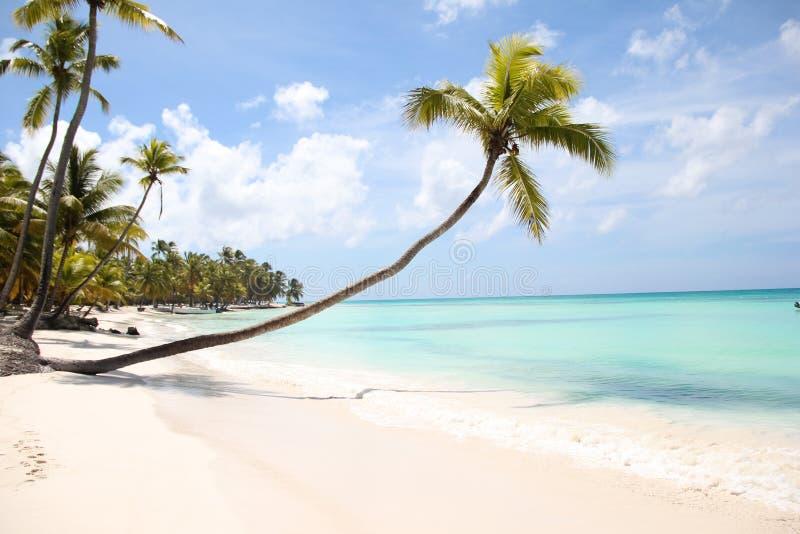 桃红色真珠色的凤螺类gigas大海洋壳在加勒比海的白色沙子说谎在绍纳岛海岛上  图库摄影
