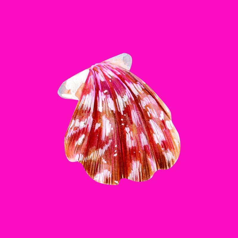 桃红色真珠色的壳扇贝 皇族释放例证