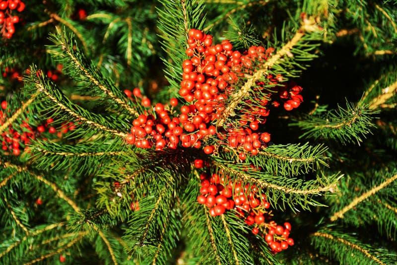 桃红色红色橙色冬天花和绿色叶子,自然本底 库存照片