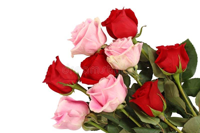 桃红色红色玫瑰 库存照片