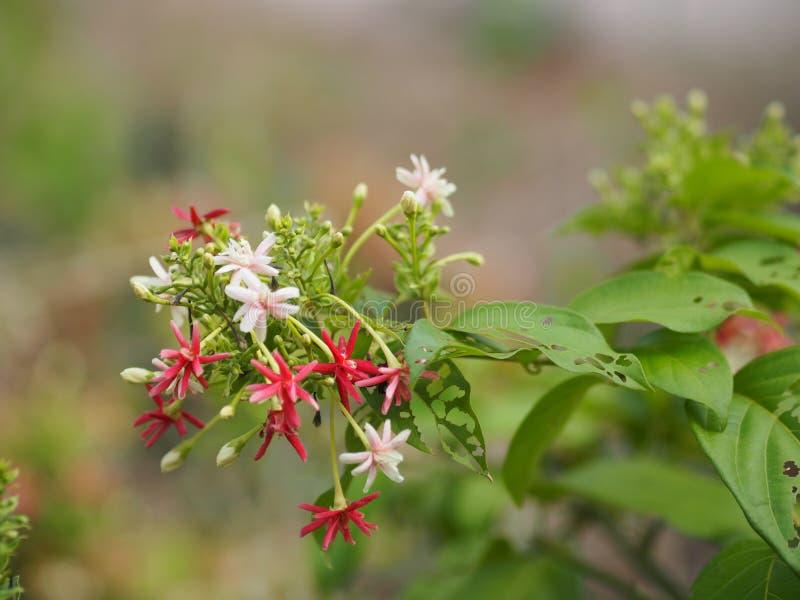 桃红色红色白花迷离自然背景空间为写道 库存照片