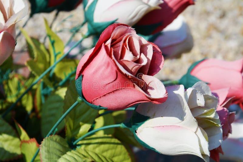 桃红色纸玫瑰色背景 库存照片