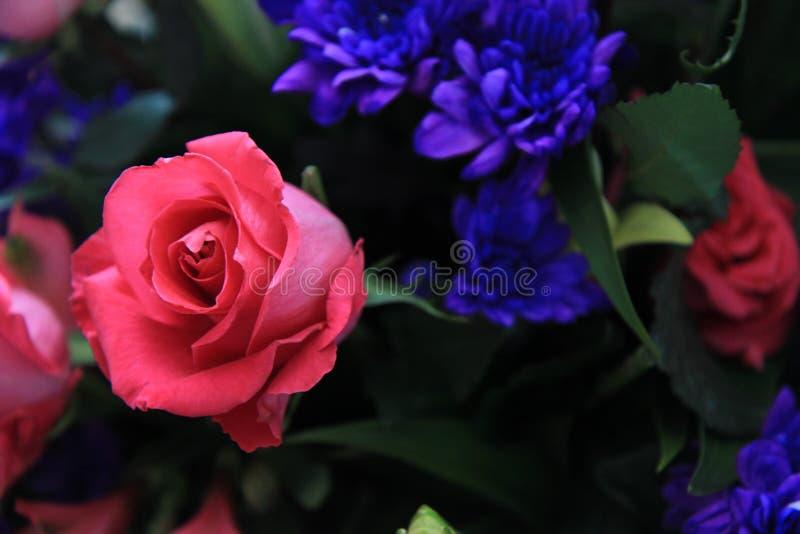 桃红色罗斯和紫色花 库存图片