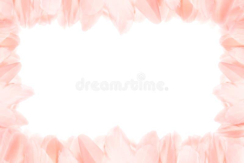 桃红色羽毛水平的框架  r 免版税库存照片