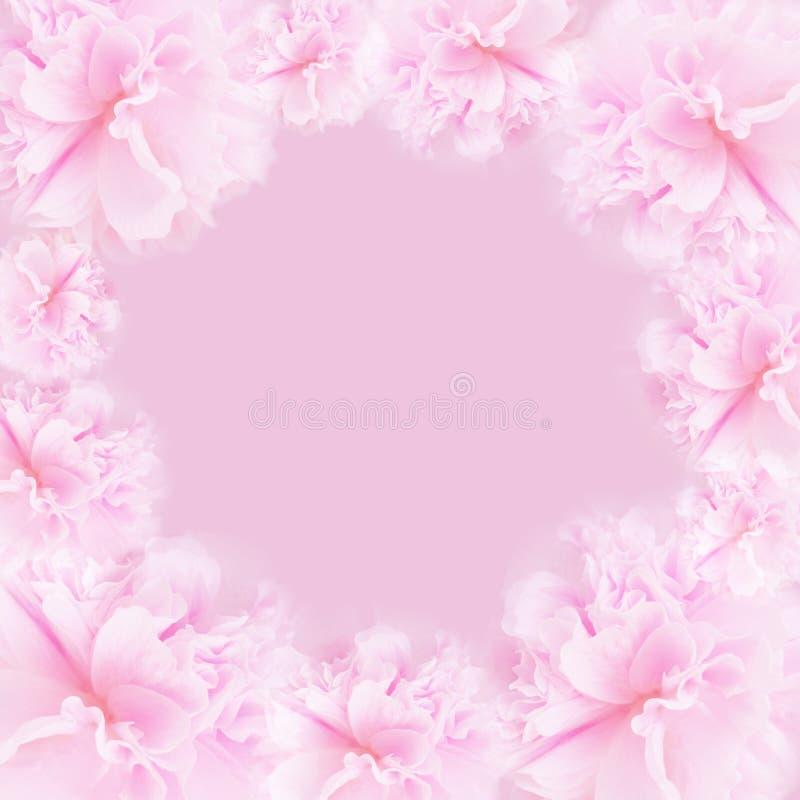 桃红色背景 图库摄影