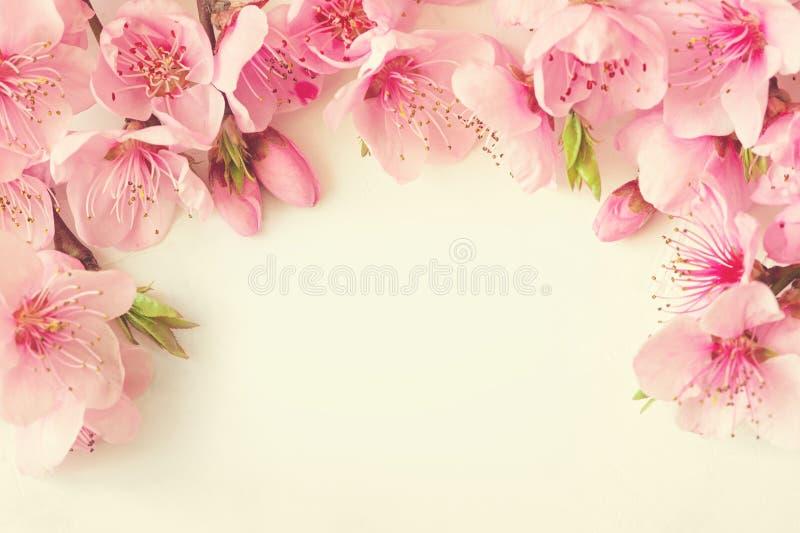 桃红色花、分支、叶子和淡紫色瓣框架在白色背景 平的位置,顶视图 免版税库存图片