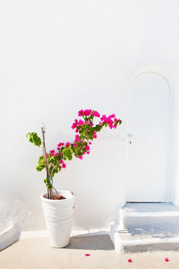 桃红色花和白色建筑学 免版税库存照片