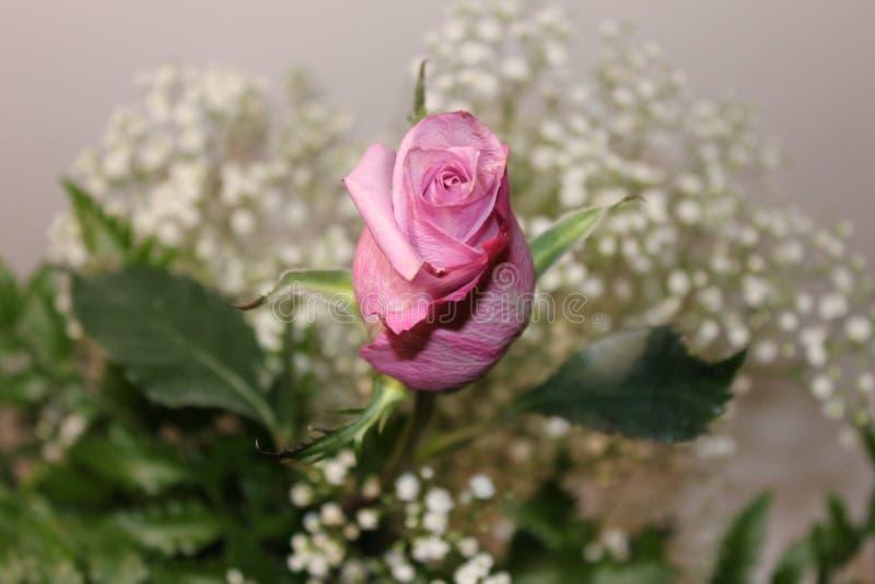 桃红色花和绿色叶子 免版税图库摄影