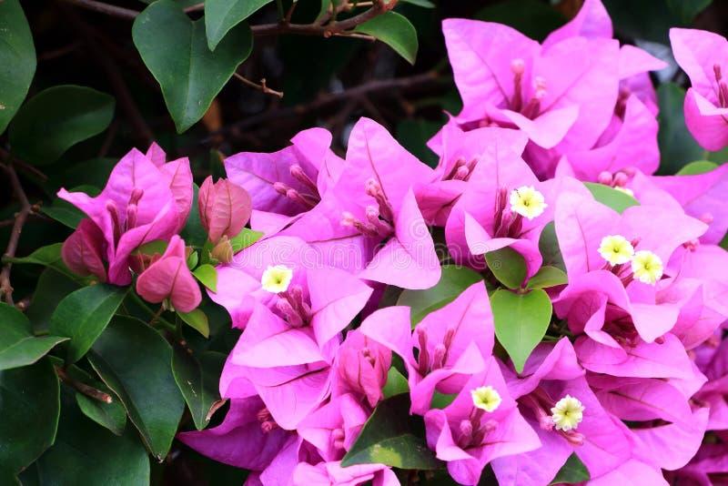 桃红色花和绿色背景 库存图片