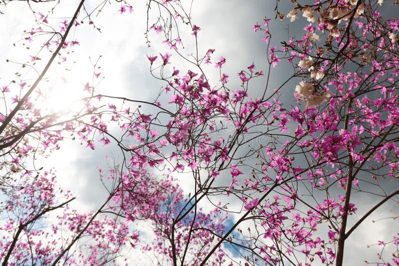 桃红色花在剧烈的天空下 免版税库存照片