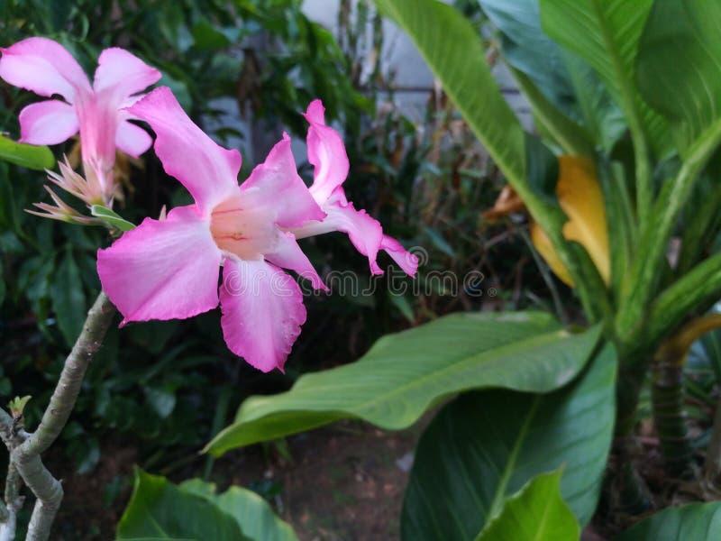 桃红色花在绿色庭院里 免版税库存照片