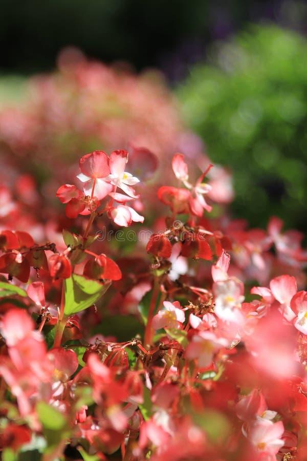 桃红色花小组 图库摄影