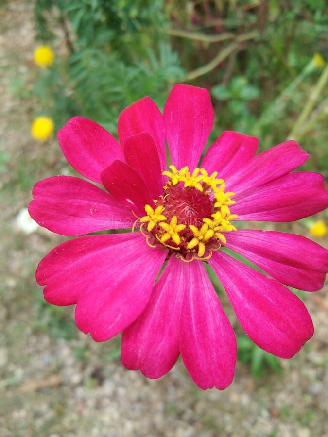 桃红色花开花的自然植物群 库存照片